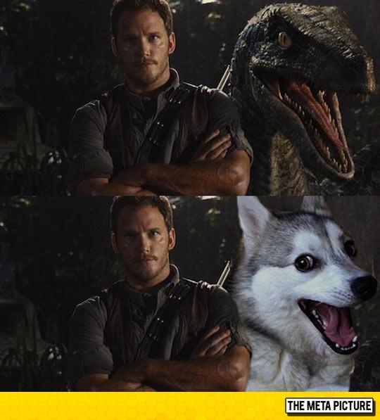 funny-Chris-Pratt-raptor-Doge