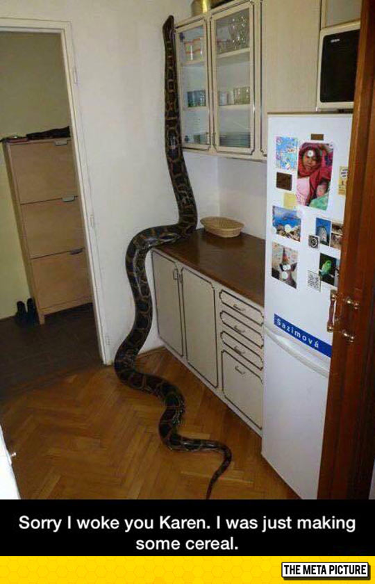 funny-big-snake-kitchen-cereal
