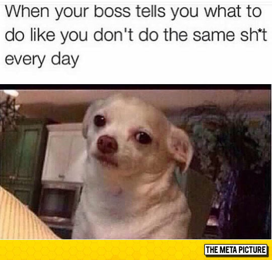 funny-boss-office-tell-you-dog-annoyed
