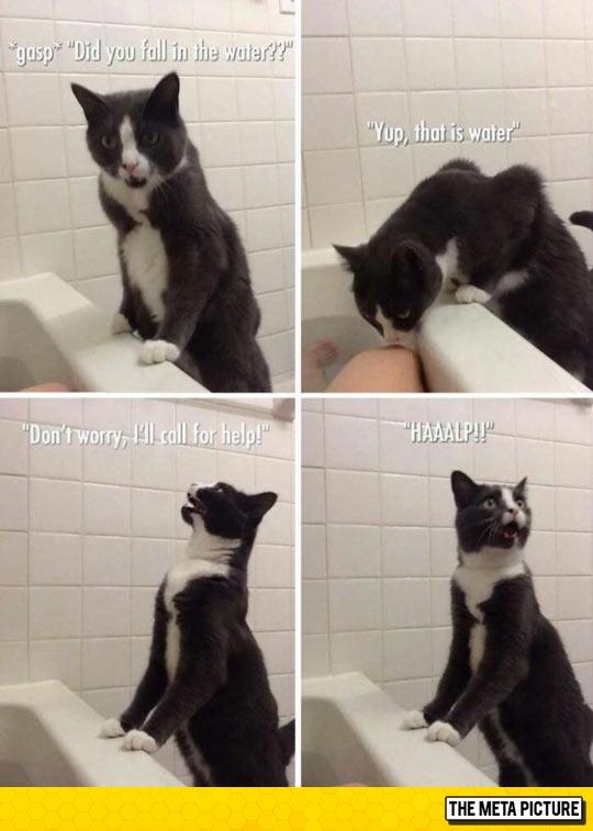 funny-cat-bath-call-water