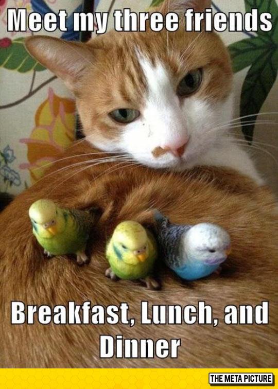 funny-cat-birds-friends-food