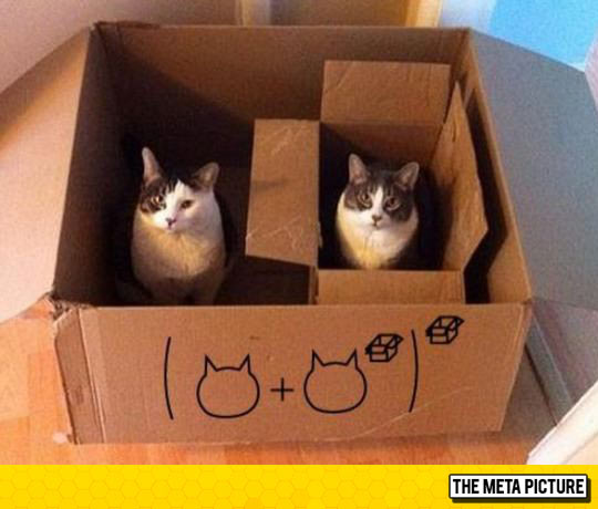 Cat Maths Are Very Simple