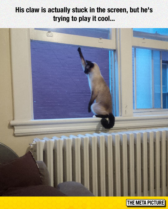 funny-cat-claw-stuck-screen