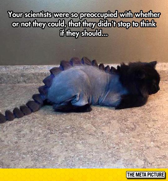 Dinosaur Kitty
