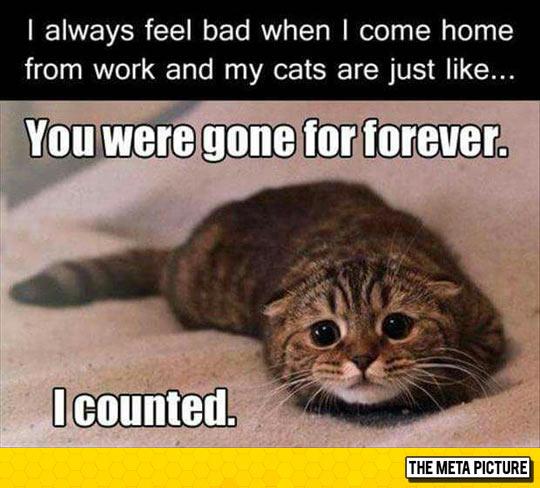 So Sad And So Cute