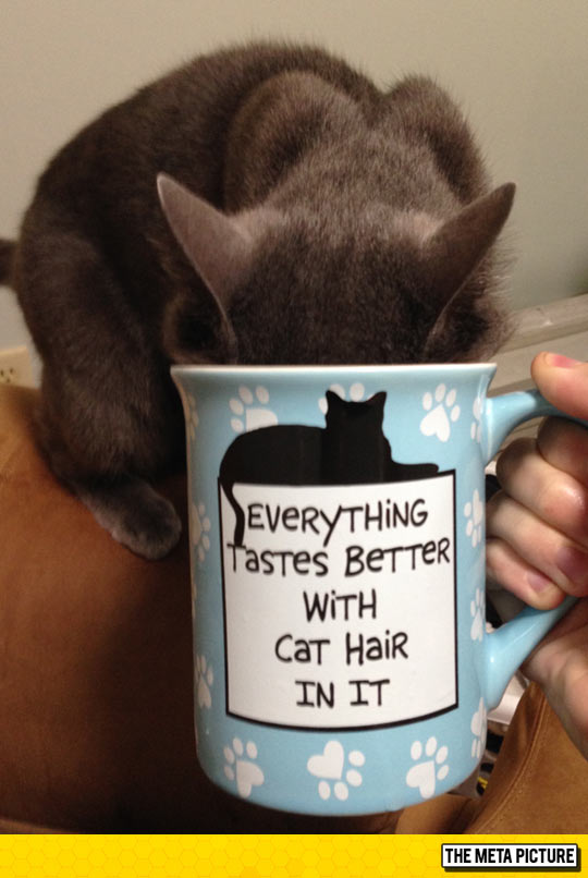 Cat Lady Level: Expert