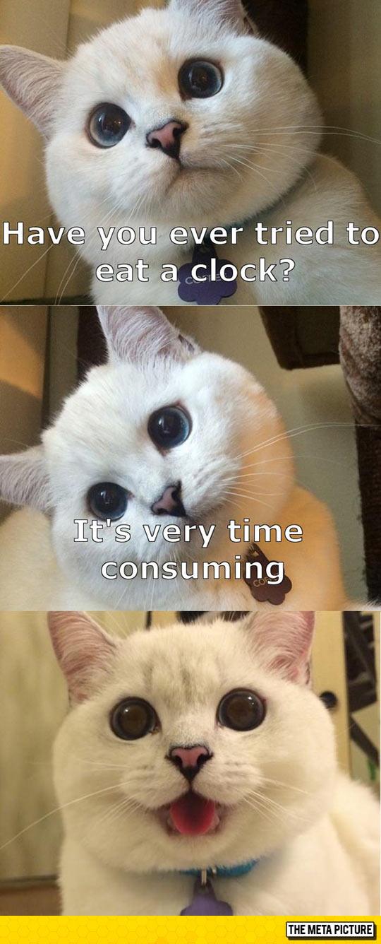 Cat Tells A Joke