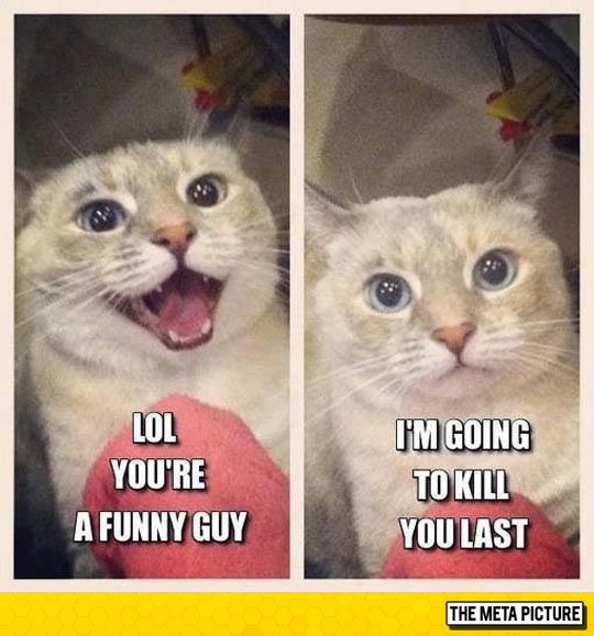 This Is Basically Every Cat I Know