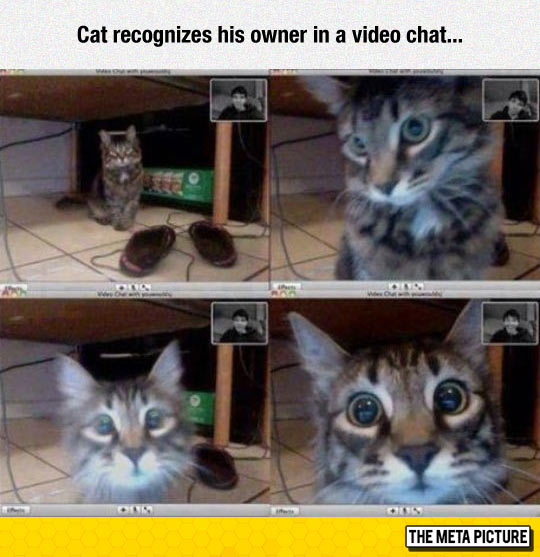 funny-cat-video-chat-recognizes