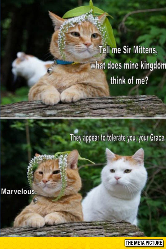 These Cats Crack Me Up Every Time