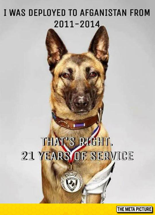 funny-dog-Afghanistan-service-hero