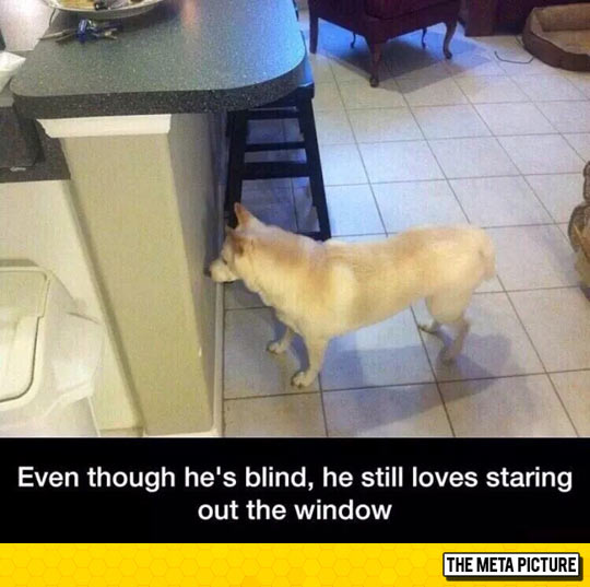 He Could Gaze Out There For Hours