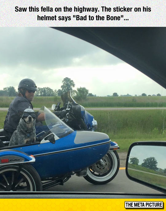 funny-dog-motorcycle-sidecar-road