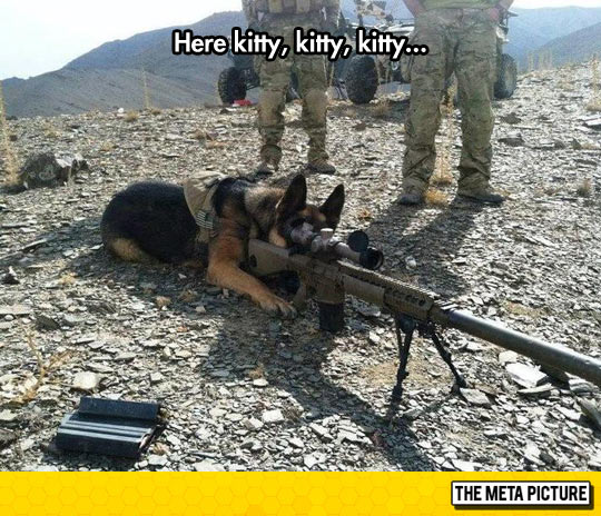 funny-dog-sniper-soldier-weapon