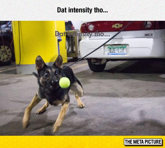 funny-dog-tennis-ball-chase-leash