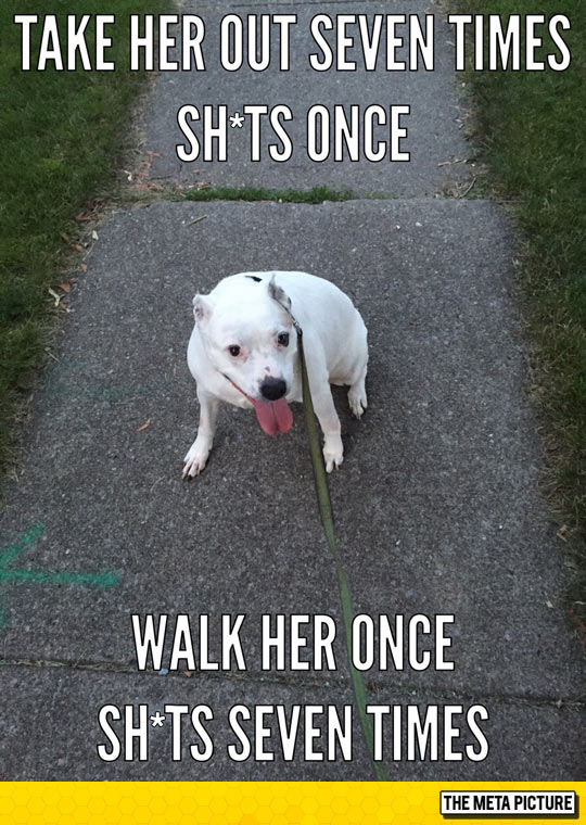 funny-dogs-taking-walk-out