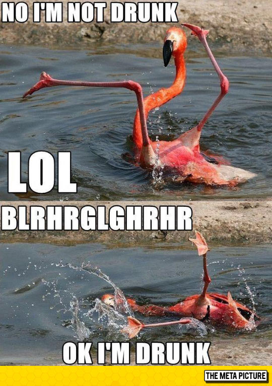 funny-flamingo-river-crazy-drunk