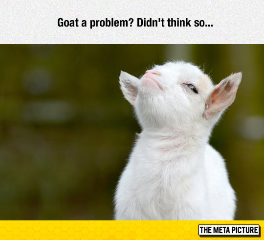 The Greatest Picture Of A Goat I