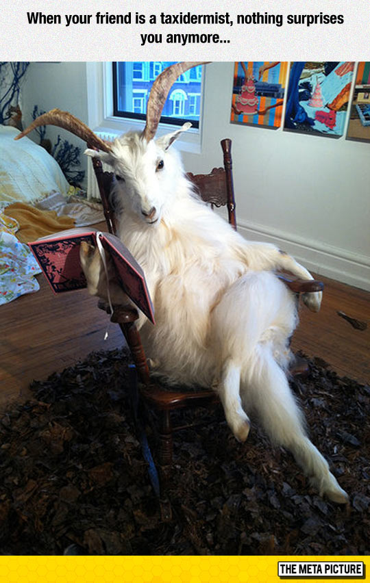 funny-goat-taxidermy-reading-book