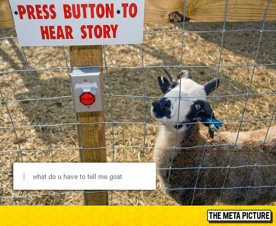 funny-goat-tell-you-story-button