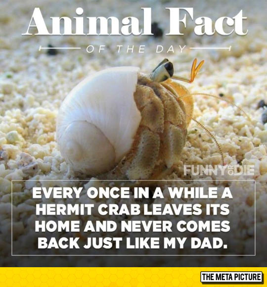 Fun Animal Fact
