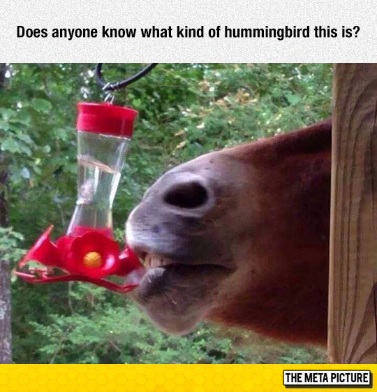 funny-horse-licking-bird-feeder