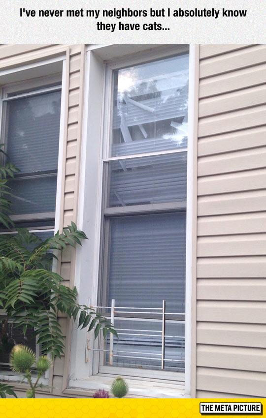 funny-house-windows-broken-cats