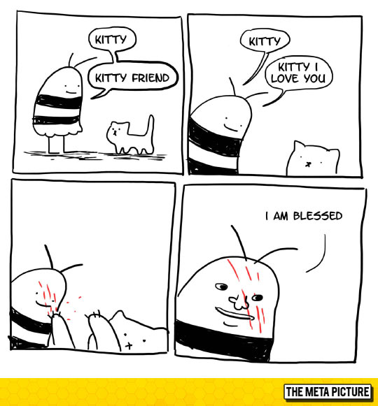 May I Have Your Blessing Little Cat?