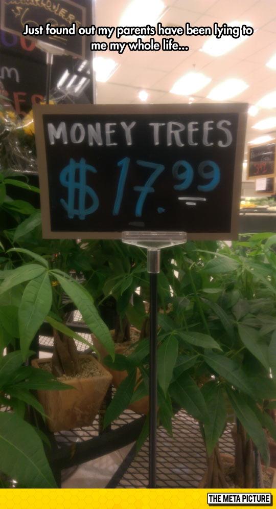 funny-money-tree-price-plants