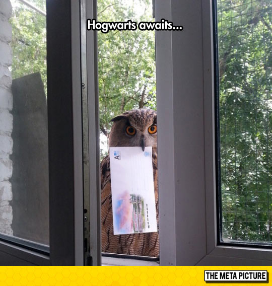 funny-owl-mail-letter-window