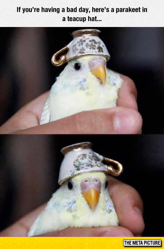 funny-parakeet-teacup-hat-bird
