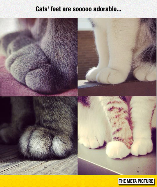 funny-paw-feet-cats-adorable