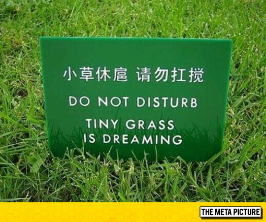 funny-sign-grass-dreaming-cute