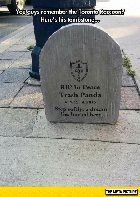 funny-tombstone-raccoon-Toronto-RIP
