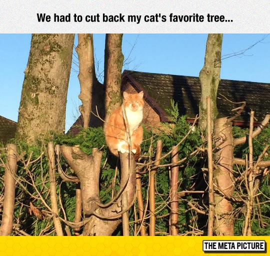 funny-tree-cat-cut-off-sad