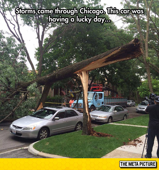 funny-tree-storm-lucky-day-car