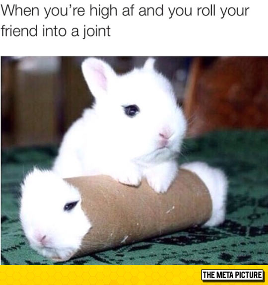 funny-white-little-bunny-problem