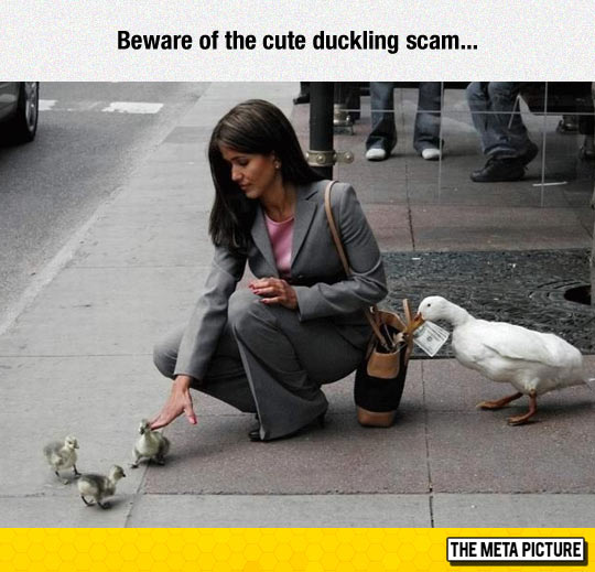 funny-woman-petting-ducks-steal