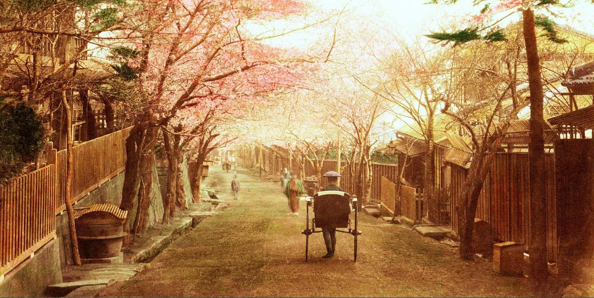 1890s Japan, cherry blossoms and rickshaw driver strolling through town