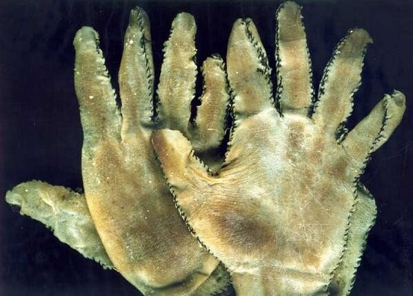 6. Not Just Any Gloves!