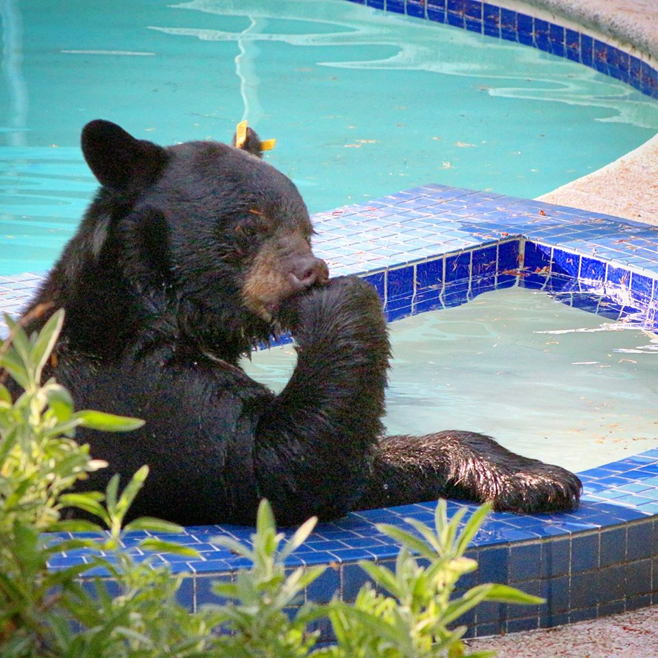 A bear deep in thought