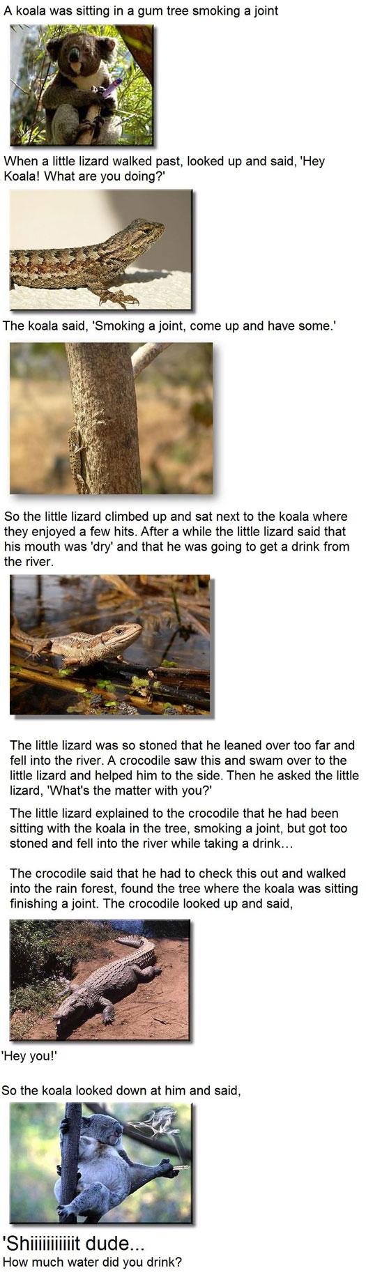 A koala is sitting up a gum tree smoking a joint when a little lizard walks past