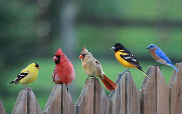 Angry birds found!