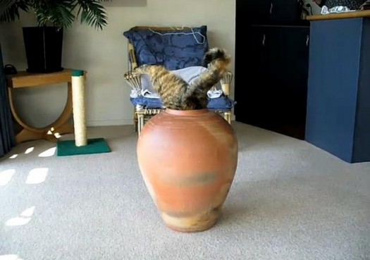 Apparently Cats Also Love Pots5