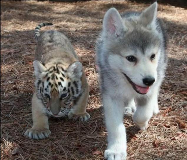 Dangerously Cute Animal Pals