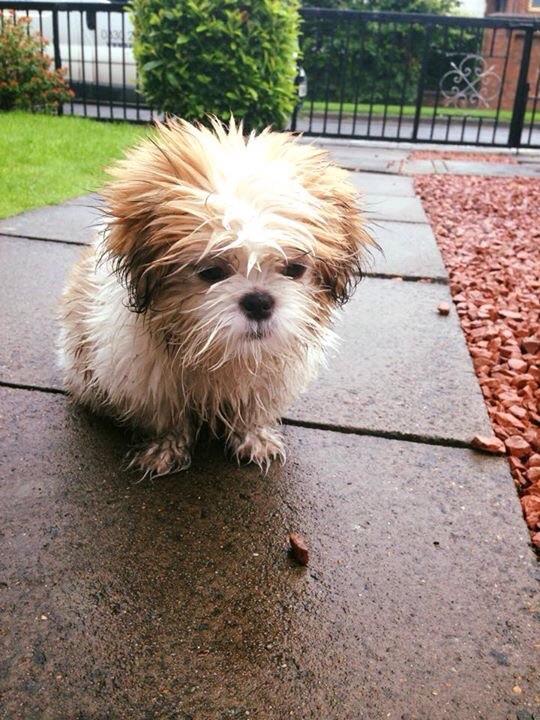 Joey in the rain.