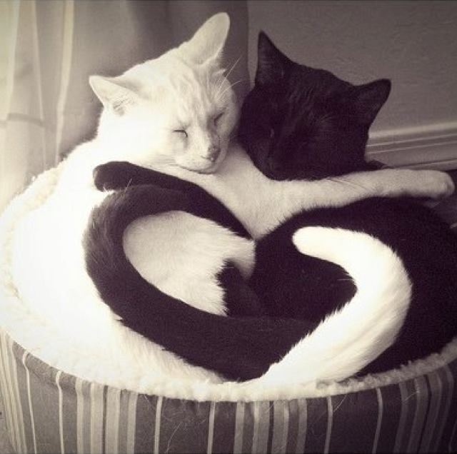 Love in black and white!!!!!