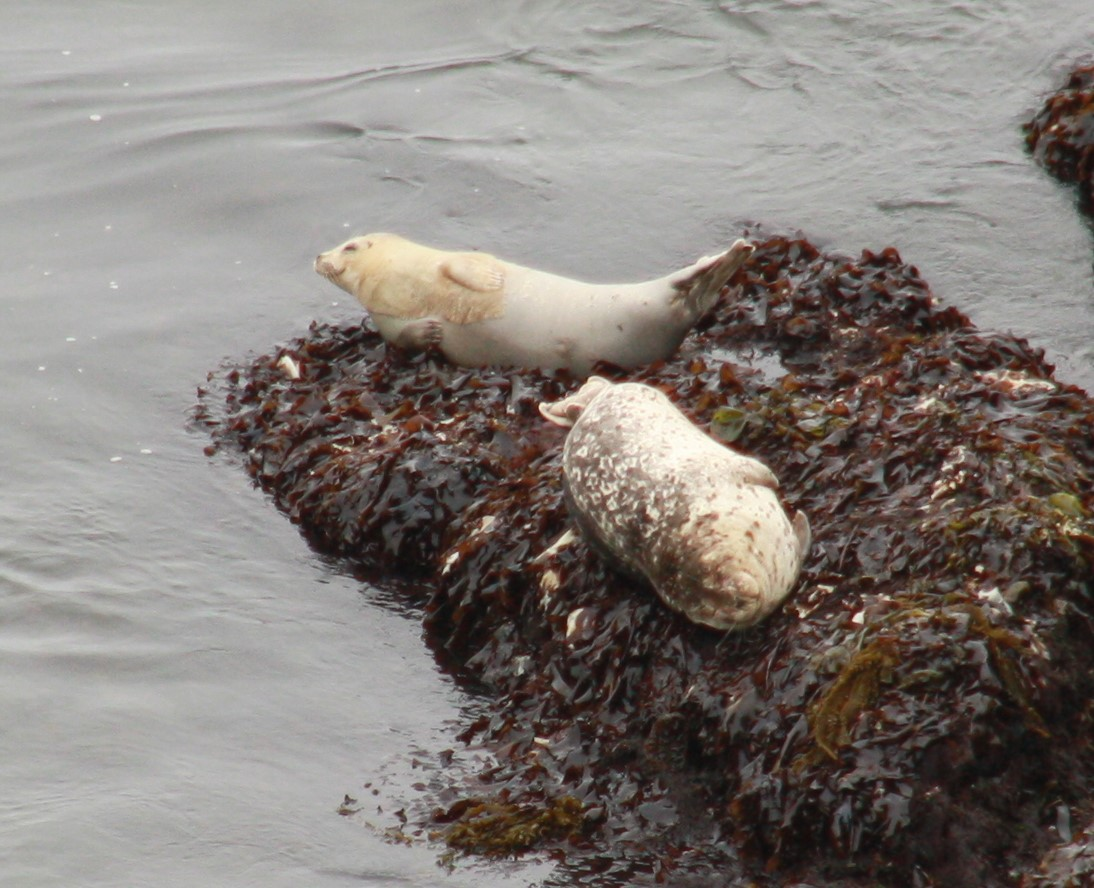 One happy seal on the rocks