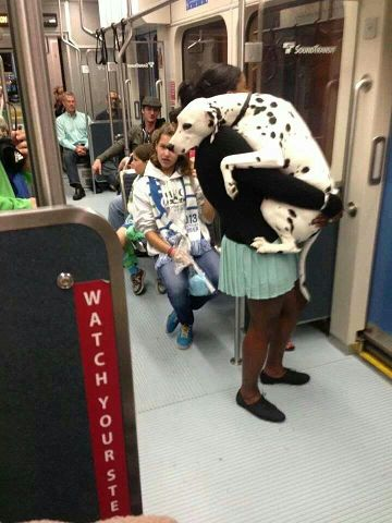 Poor dog's terrifying first train ride.