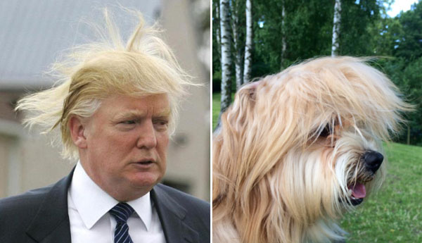 Things-Donald-Trump-looks-like-01